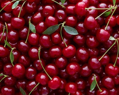 Les Cerises Est Un Fruit Rouge Du Printemps