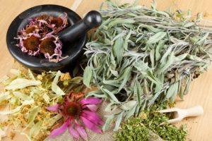 6 Plantes Médicinales Les Plus Efficaces