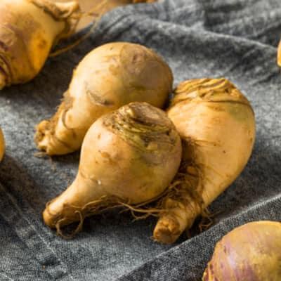 Rutabagas-legumes-anciens